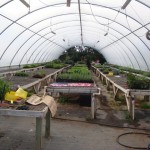 This is one of several hoop houses that are on the farm where new plants are grown in controlled conditions.
