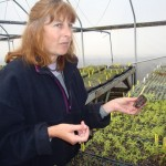 Owner, Rosemary Loveall, explaining the process of propagating.